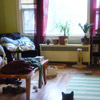 messy apartment with cat.
